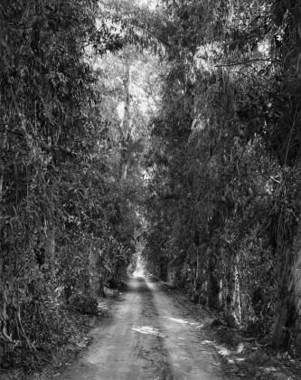 Eucalyptus alley, Riverside, California, 1978