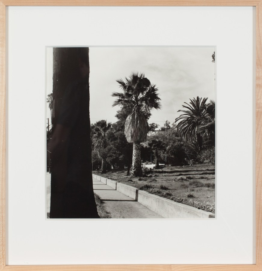 Black-and-white photograph of a palm tree next to a road.