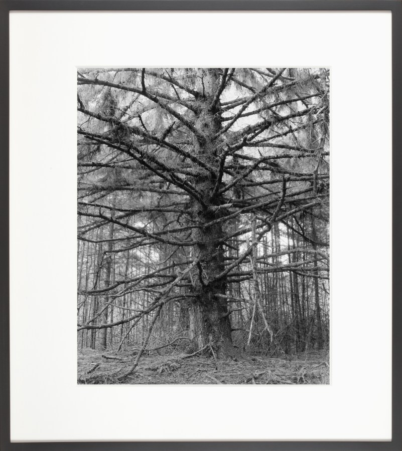 A framed black and white photograph of a leafless tree, the trunk in the center, and the branches coming out on all sides