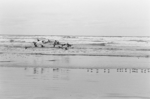 A black and white photograph of birds flying low over the ocean
