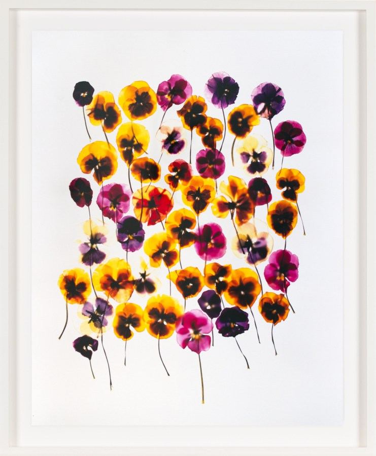 Image of a cluster of yellow and purple flowers on a white background