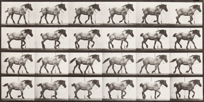 Sepia toned photograph with a grid of 24 panels showing walking horse.