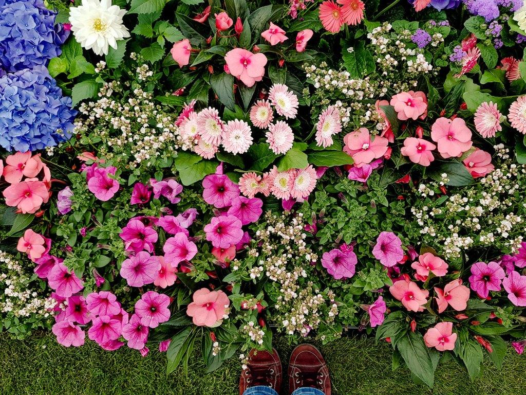 Fräulein Blütenstaub