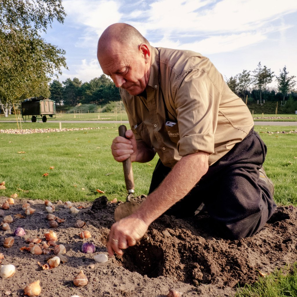 Keukenhof Zwiebeln pflanzen