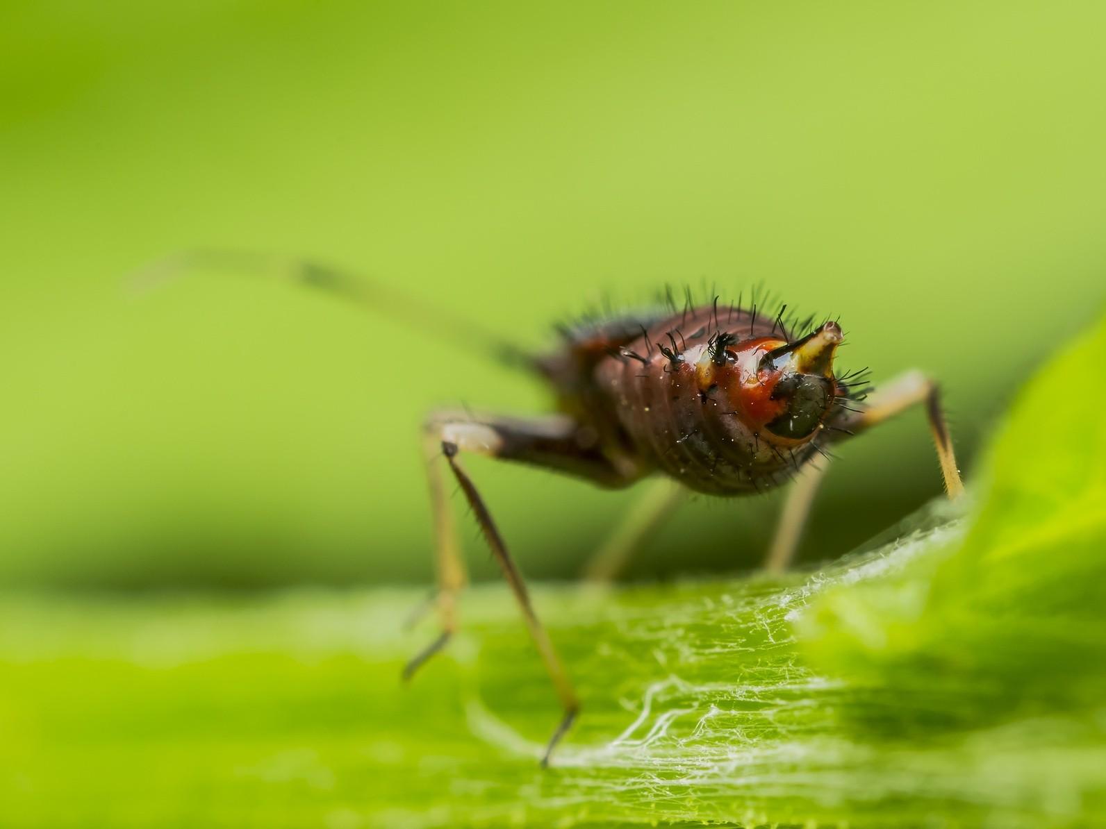 Fliegen blumenerde for Trauermucken bekampfen