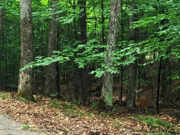 More wildlife sightings: Bambi!