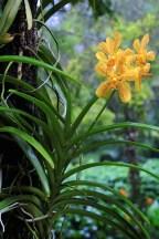 Ogrody-Botaniczne-Singapuru-04