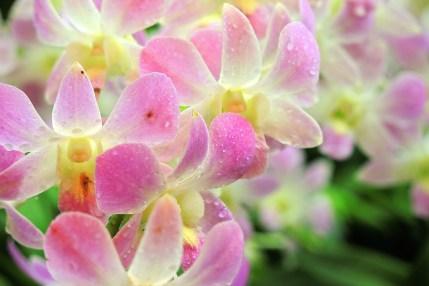 Ogrody-Botaniczne-Singapuru-06