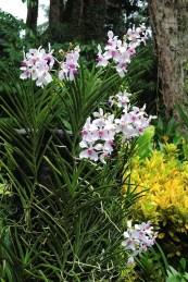 Ogrody-Botaniczne-Singapuru-07