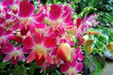 Ogrody-Botaniczne-Singapuru-12