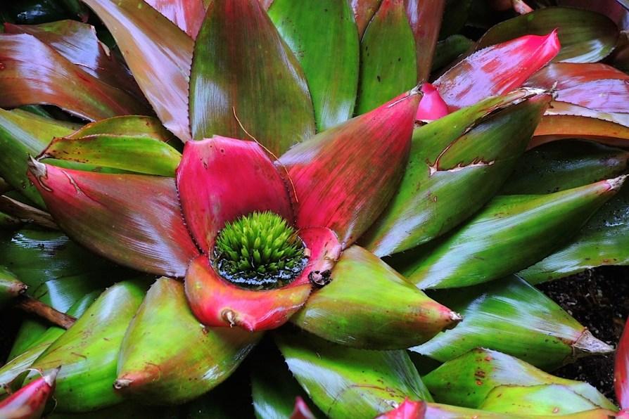Ogrody-Botaniczne-Singapuru-41