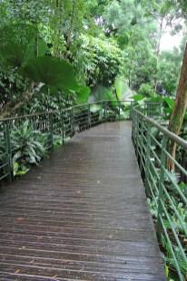 Ogrody-Botaniczne-Singapuru-45