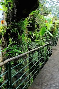 Ogrody-Botaniczne-Singapuru-47