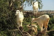 kozy-na-drzewie-maroko-001
