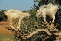 kozy-na-drzewie-maroko-004