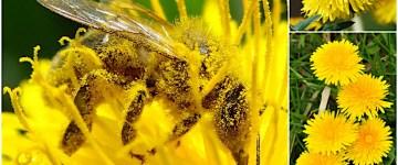 A co Ty robisz dla pszczół?