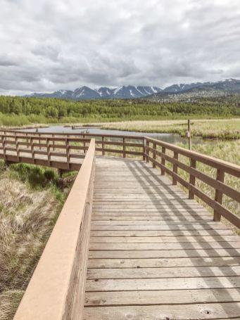 Alaska Rezerwat ptaków Potter Marsh 04