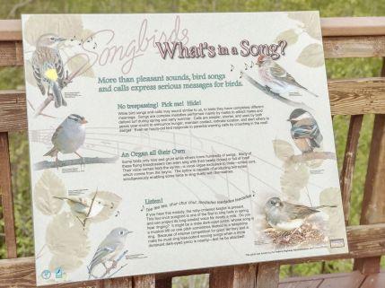 Alaska Rezerwat ptaków Potter Marsh 08