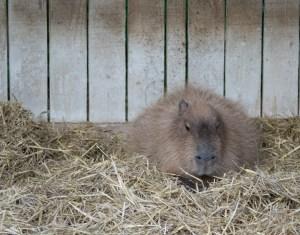 2015-08-01 Bristol Zoo at night 011