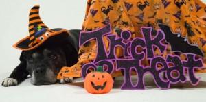 2015-09-20 Halloween Oldies shoot 2 189