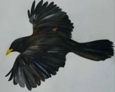 Enigma with a Blackbird by Amy McCartney