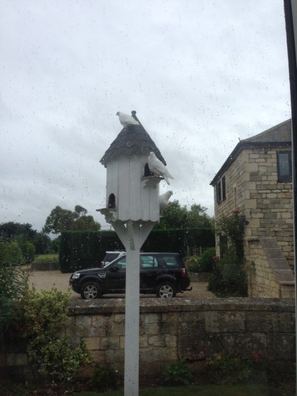 Bradford-on-Avon-Doves