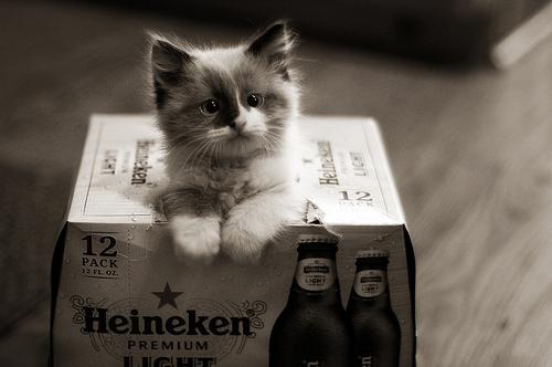 Chat et bières