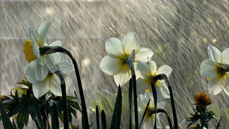 Göydən bərəkət yağır: yağış suyunun faydaları