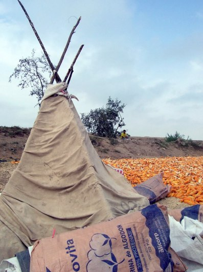 Corn drying beside a tent along the Pan Amerian Highway in Peru, South America