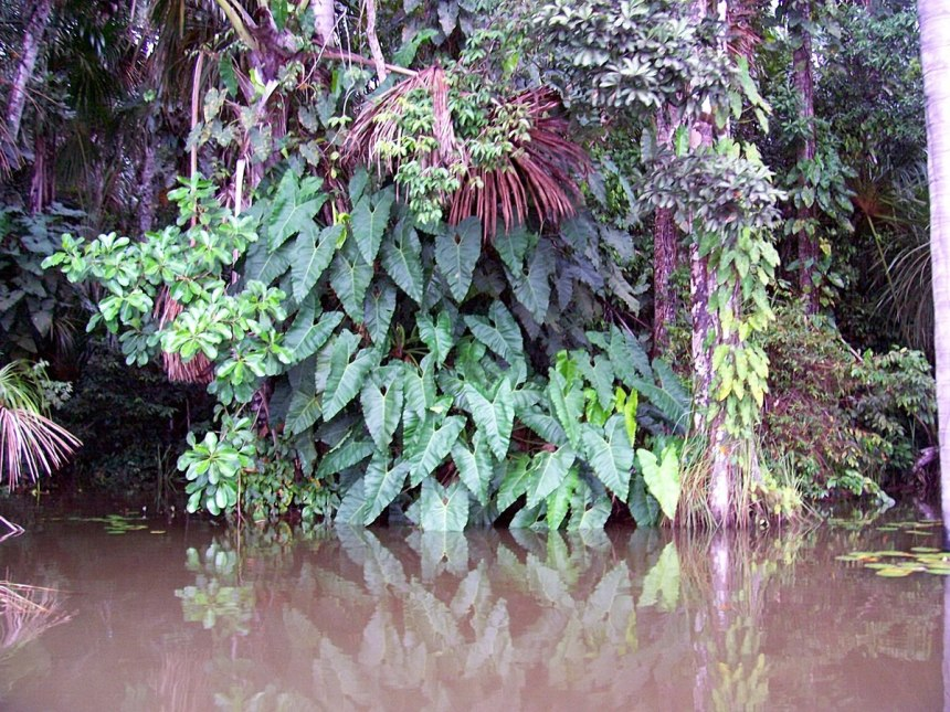 jungle along lake sandoval - peru