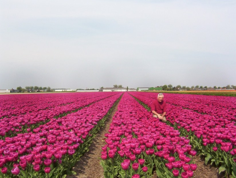 An image of Bob in a field of pink tulips near Lisse, in the Netherlands. Photography by Frame To Frame - Bob and Jean.
