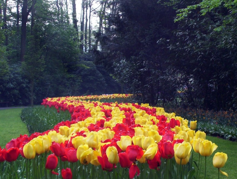 An image of red and yellow tulips growing in a flower bed at Keukenhof Gardens near Lisse, in the Netherlands. Photography by Frame To Frame - Bob and Jean.