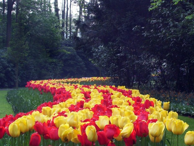 Red and yellow tulips growing in a flower bed at Keukenhof Gardens in the Netherlands.
