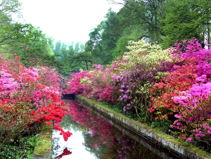 An image of a reflection pool surrounded by Azaleas at Keukenhof Gardens in the Netherlands. Photography by Frame To Frame - Bob and Jean.