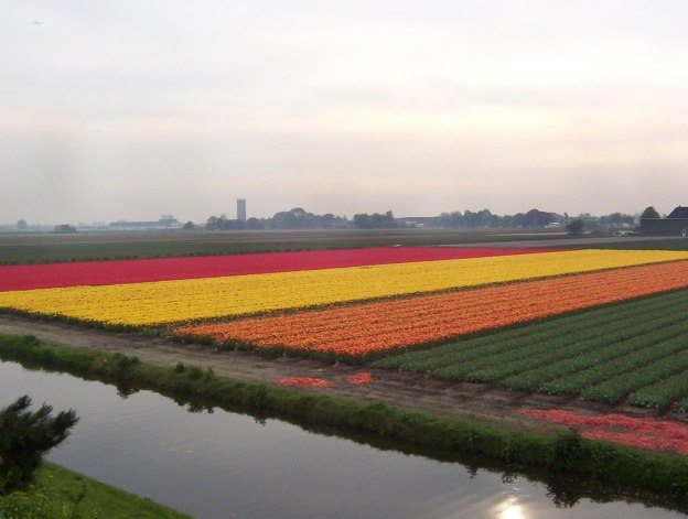An image of pink, yellow, and orange tulips growing in a field beside a canal near Lisse the Netherlands. Photography by Frame To Frame - Bob and Jean.