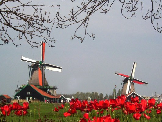 Two working windmills at Zaanse Schans Holland