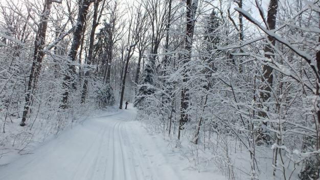 Fen Lake X-ski Trail - Algonquin Park - Ontario