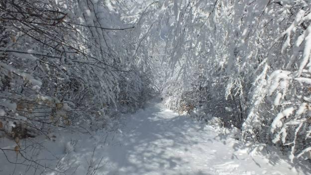 Snowy tunnel on - Fen Lake Ski Trail - Algonquin Park - Ontario