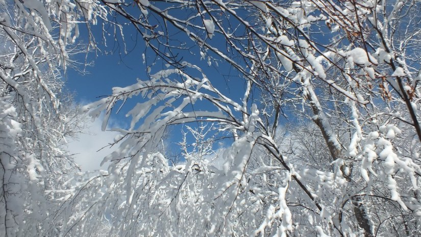 Tree tops and blue sky - Fen Lake Ski Trail - Algonquin Park - Ontario