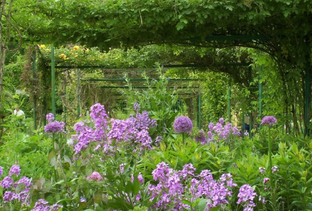 An image of Phlox and Allium growing in Claude Monet's House Garden in Giverny, France.