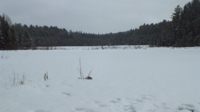 Frozen beaver pond on Beaver Pond Trail - Algonquin Provincial Park