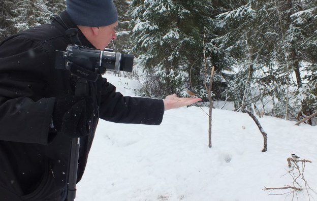 Bob feeds a Red Breasted Nuthatch in Algonquin Park
