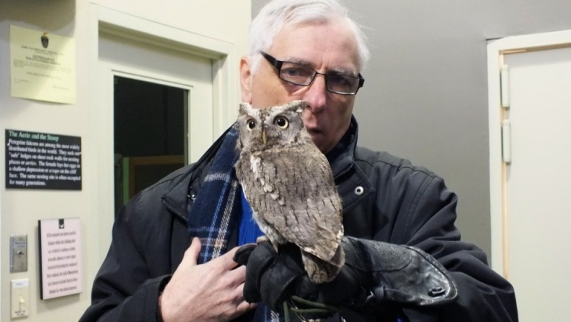 Bob interacts with an Eastern Screech owl at the Mountsberg Raptor Centre