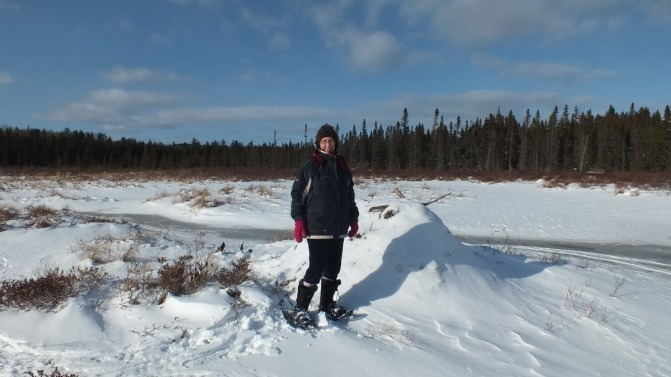 Jean checks out a beaver lodge in Spruce bog in Algonquin Park