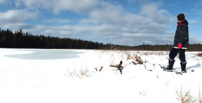 With snowshoes on Jean looks for beavers in Algonquin Park