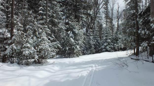 Leaf Lake ski trail - snowy corner - Algonquin Park - Ontario