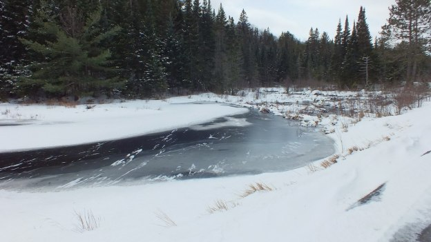 Photo of ice covered swamp area along the edge of the Opeongo Road in Algonquin Provincial Park, Ontario.