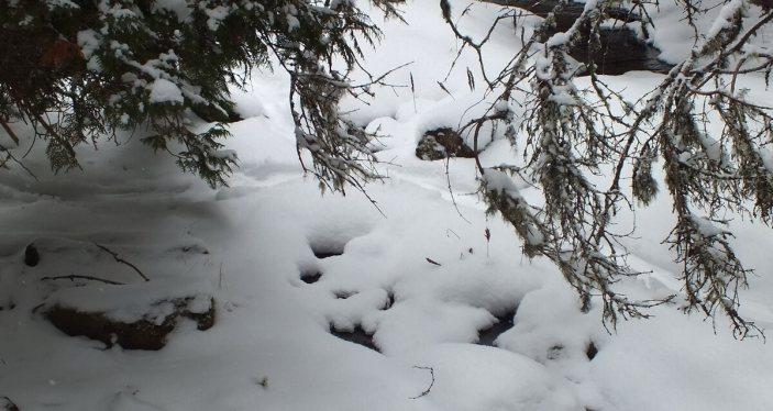 Otter slide track in snow - Algonquin Provincial Park