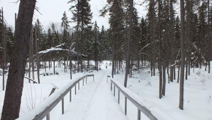 Spruce Bog boardwalk under snow in Algonquin Park - Ontario
