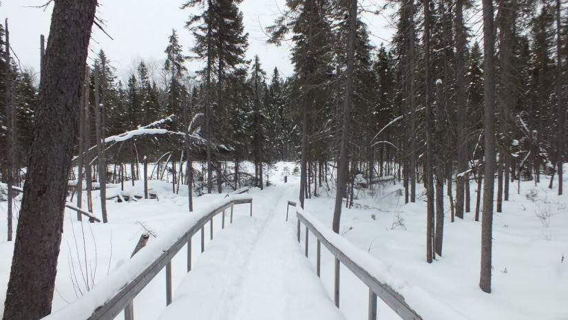 Spruce Bog boardwalk under snow, Algonquin Park - Ontario